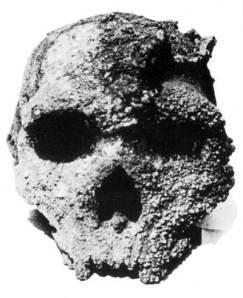 Το κρανίο του Αρχανθρώπου των Πετραλώνων Χαλκιδικής, που βρέθηκε στο Σπήλαιο, είναι 700.000 χρόνων - και όχι 300.000 χρόνων, όπως γράφει η πινακίδα του Μουσείου του Σπηλαίου, λέει η Ευρ. Ανθρωπολογική Ένωση...